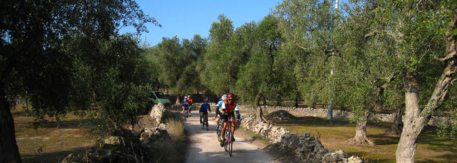 Puglia Biketour: cycling among the olive trees